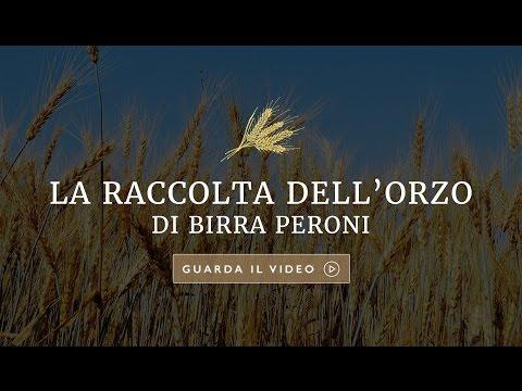 La raccolta dell'orzo di Birra Peroni