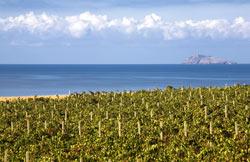 Tre Bicchieri 2013 Gambero Rosso regione Sardegna: Carignano del Sulcis al massimo