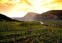 Bicchieri Vini Italia Trentino