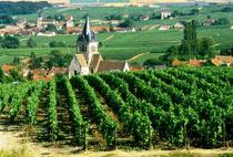 Vendemmia in calo anche in Francia, con un crollo della produzione di champagne stimato a -26%