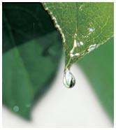 Industria Acqua Minerale Compatibilita Ambientali