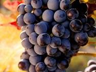 Frutta Succo Meglio