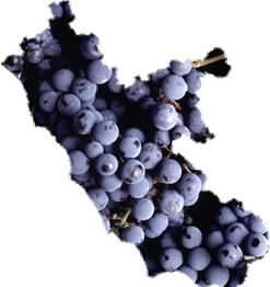 Tre Bicchieri 2013 Gambero Rosso regione Lazio: dai Castelli la via della qualità