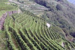 Tre Bicchieri 2013 Gambero Rosso regione Liguria: piccoli numeri, grandi vini