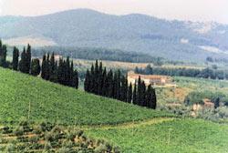 Tre Bicchieri 2013 Gambero Rosso regione Toscana. Bolgheri al top. Premiate 17 etichette di Brunello di Montalcino e 13 etichette di Chianti Classico