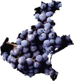 Tre Bicchieri 2013 Gambero Rosso regione Veneto: vincono la finezza e l'eleganza