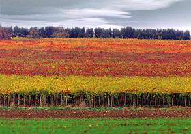 Bicchieri Gambero Rosso Gambero Rosso Regione Molise Vini Semplici Ottimo Rapporto Prezzo