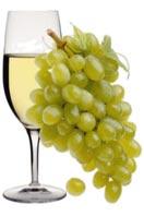 Vini Bianchi Consumati Moderatamente Apportare Benefici Salute