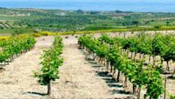 Bicchieri Gambero Rosso Gambero Rosso Regione Calabria Ricomincia