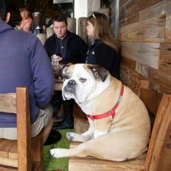 Adesso anche i cani, accompagnati dai loro padroni, possono entrare nei PUBBLICI ESERCIZI