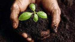 Progetto DAL CAFFE' ALLE PROTEINE: coltivare funghi con i fondi caffè