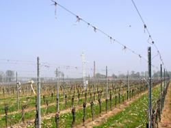 Bosco del Merlo e la Viticoltura Ragionata