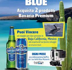 Bavaria-Wild-Blue
