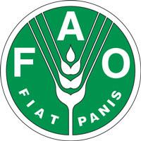FAO: le azioni per ridurre gli sprechi alimentari