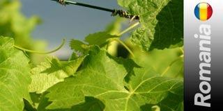 ROMANIA: terra di conquista per i produttori vinicoli italiani. Fra questi Antinori