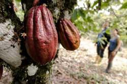 SALONE DEL GUSTO: l'incredibile viaggio del cacao