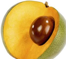 La LUCUMA, frutto peruviano antiossidante e antinfiammatorio, è ora anche un gelato senza glutine