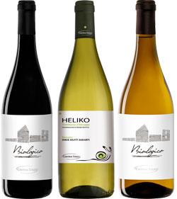 CANTINA TOLLO sfonda sul mercato con il vino biologico