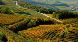 CAVIT NATURA TRENTINA: è on line la nuova piattaforma che racconta le bellezze e la gastronomia del Trentino