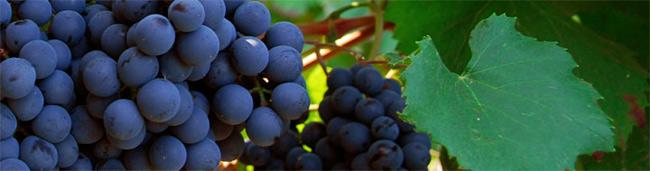 consorzio-oltrepo-pavese-vini-e-vitigni