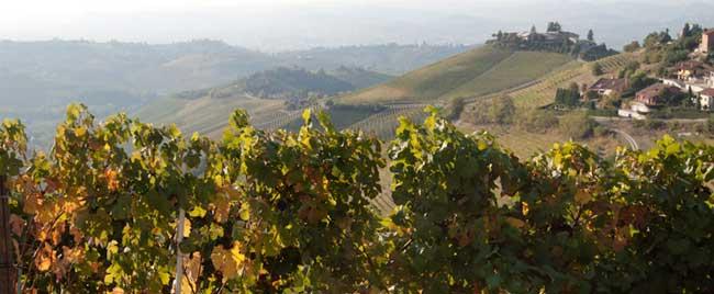 grandi-marchi-fascia_vigne