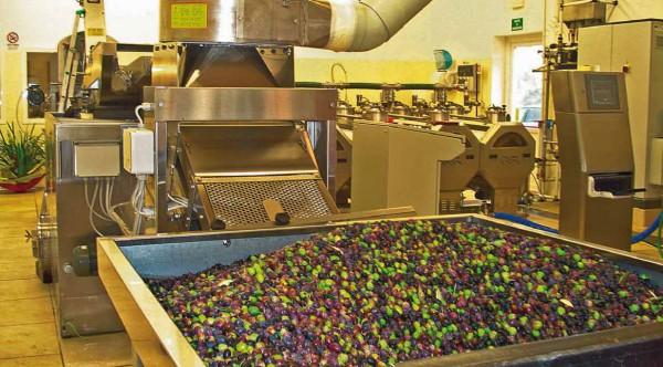 olio di oliva produzione 2
