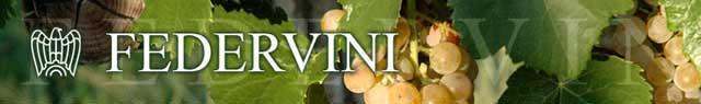 federvini-banner-FEDERVINI