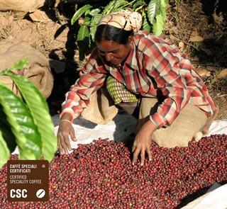 Mode Csc Import Caffè Caffè Speciali Certificati Fuori Scelte
