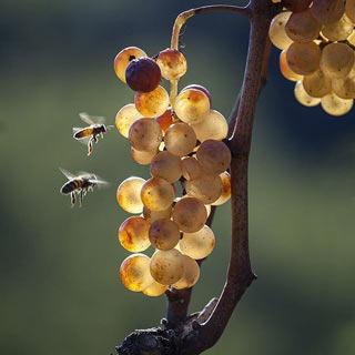 mercato dei vini dei vignaioli a Piacenza:  numeri in crescita per la FIVI