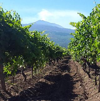 La Sicilia di DONNAFUGATA è anche Etna e Cerasuolo di Vittoria