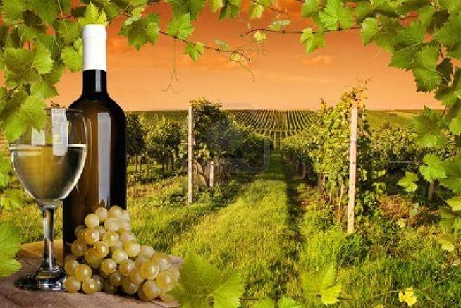 bottiglia-e-bicchiere-di-vino-e-dei-vigneti-del-tramonto
