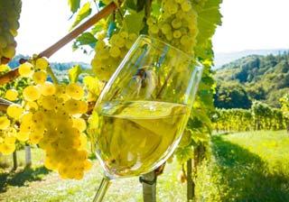 I due vini biologici di Casalfarneto, il trionfo colorato della natura, al Vinitaly 2017