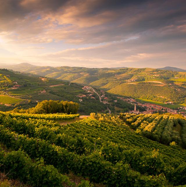 Tecnologie Genetiche Ivai Cooperativi Rauscedo Varietà Viticoltura Viticoltura Sostenibile Tenuta Sant'antonio Vini Veneti Modelli Resistenti Wine Meridian Futuro Vino