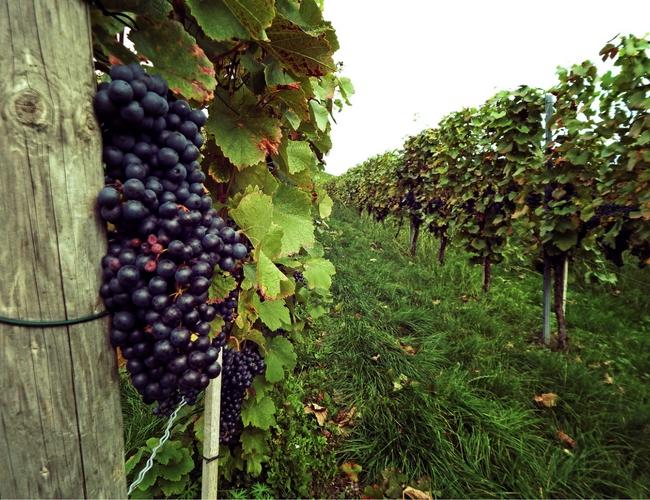 Export Vini Vinitaly Filiera Vino Italiano Chianti Vino Consorzio Vino Chianti Classico Ue Unione Europea Italiano Dramma Vino Italiano Export Rischio Orizzonte Fondi