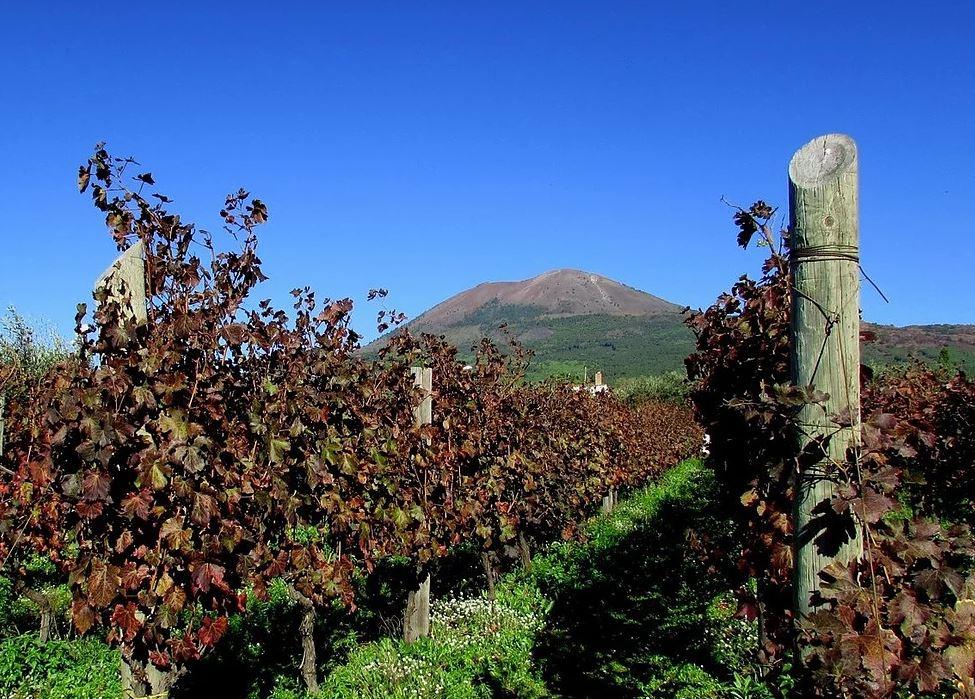 Vino, la Sicilia prima per investimenti nel biologico