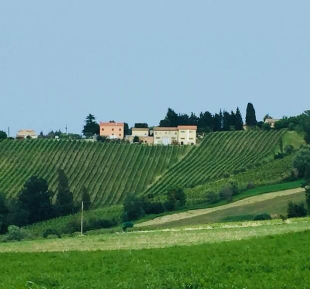 vitigno sabbionare