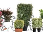 """Estate in fase 2, da Pistoia ecco i """"distanziatori verdi"""": pareti di piante per spiagge e ristoranti"""