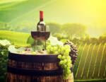 Forum Mondiale Cooperative Vinicole: conseguenze della pandemia sul settore vitivinicolo