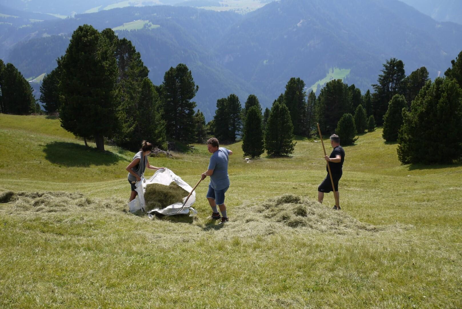 Marzadro raccolta fieno a 2000 metri