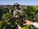 Lavazza è sponsor ufficiale del canale sostenibilità del Global Coffee Festival 2020