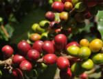 Istituto Espresso Italiano: La sostenibilità è alla base dell'evoluzione del settore del caffè