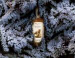 Metamorfosi: ecco come Dream Whisky sta rivoluzionando il mondo dello Scotch