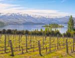 Nuova Zelanda, il rompicapo del vino: qualità alle stelle ma vendemmia ai minimi