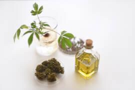 CBD Cannabis Light uso alimentare olio di canapa