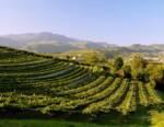 Il mercato dei vini della Valpolicella nel 2020