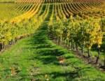 Settore vino: nei primi 3 mesi del 2021 export crollato del 20%. Interventi di sostegno