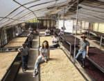 Ditta Artigianale atterra in Bolivia con gli Specialty Coffee della produttrice Daniela Rodriguez