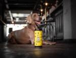 """Birra per cani? Si chiama """"Pawse"""" ed è distribuita in Italia dall'azienda """"Da Pian"""""""