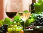 """""""Il vino 2021. One year after"""": le cantine e i consorzi puntano sull'innovazione"""