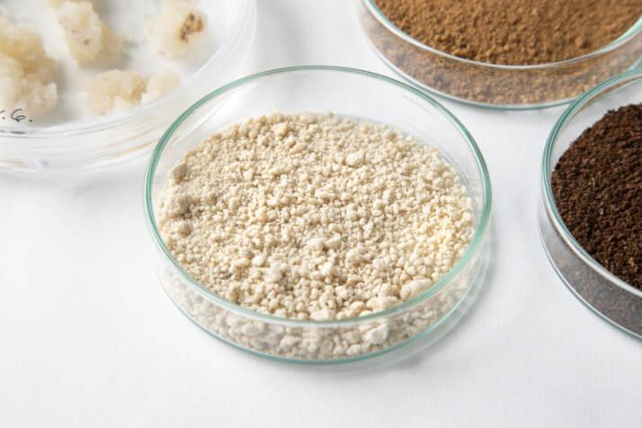 Biomassa di cellule di caffè essiccate